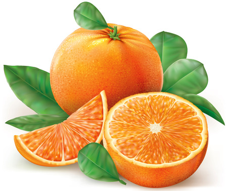 illustration fresh oranges fruits with leaves