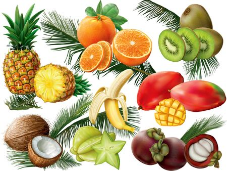 fruta tropical: Tropical fruit set with palm leaves on white background. Vector illustration Vectores
