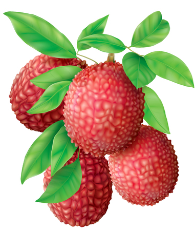 Bunch of Lychee fruits and leaves on white. Vector illustration