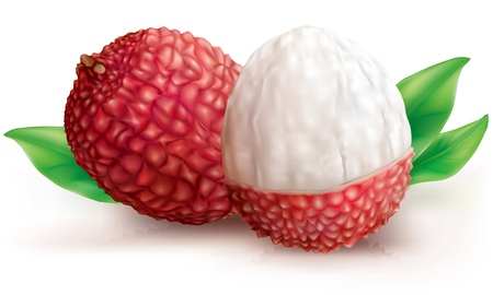 Vector illustration Lychee fruits on white background
