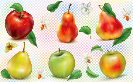 Apples and pears of different colors on a transparent background. Realistic vector illustration