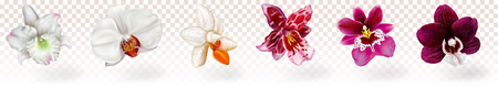 Beautiful phalaenopsis and other orchids hybrids on a transparent background.