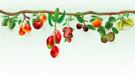 Branch of tropicals fruits on a transparent background.