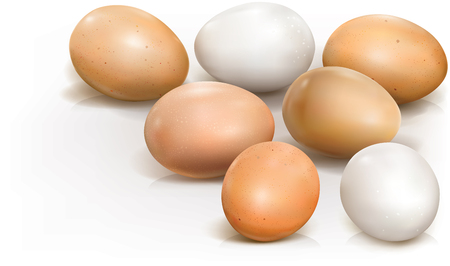 Chicken eggs on a white background. Vector illustration
