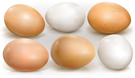 Chicken eggs on a white background. Vector illustration. Иллюстрация