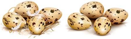 Quail eggs on a white background. Vector illustration Imagens - 95952857