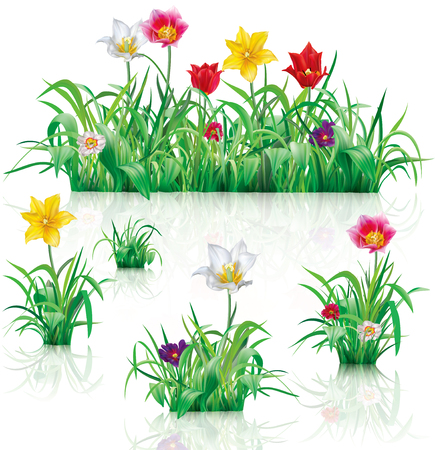 Flowers and green grass on a white background. Vector illustration