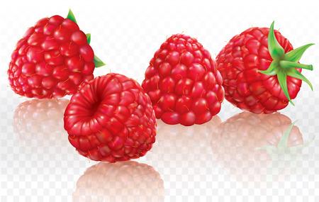 Raspberries on a white transparent background. Vector illustration