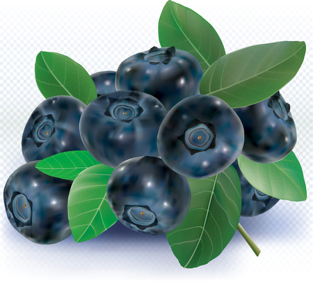 Blueberries group with leaves on white. vector illustration