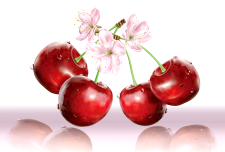 Cherries and flower on white pink background. Vector illustration