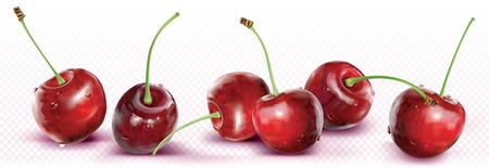 Kirschen werden in einer Linie auf transparentem Hintergrund platziert. Vektor-Illustration