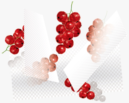 Currant red on a abstract transparent background. Vector mesh illustration