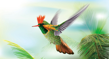 Brightly colored hummingbird tufted coquette Lophornis ornatus in flight over palm leaves. Vector curves and mesh illustration
