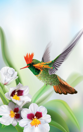 Brightly colored hummingbird tufted coquette Lophornis ornatus in flight from above over white orchids. Vector curves and mesh illustration Ilustrace