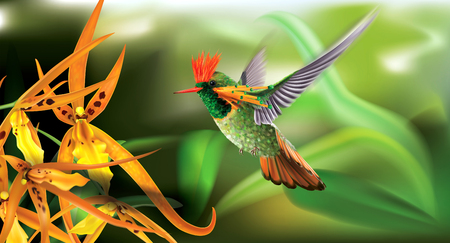 Brightly colored hummingbird tufted coquette Lophornis ornatus in flight from above over yellow orchids. Vector curves and mesh illustration Ilustrace