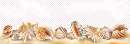 Exotic seashell mollusk on a sand and transparent background. Vector mesh and curves illustration