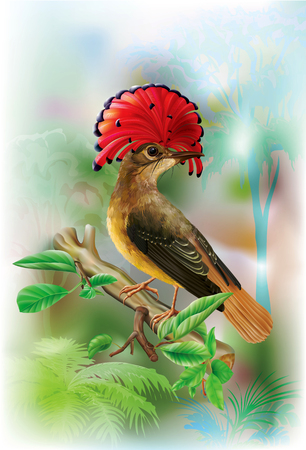 Amazonian royal flycatcher with red crest on a tropical forest background