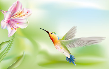 bird hummingbird flying to a flower. vector drawing