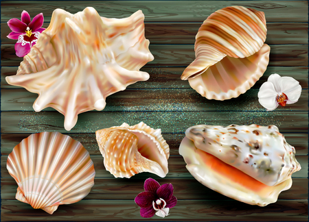 Set exotic shell  marine mollusk on a dark background. Only vector mesh illustration Ilustrace