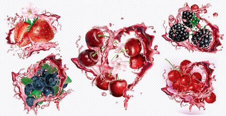 Cherry, Strawberry, Blueberry, Blackberry and Currant red in splashes of juice on transparent background. Vector mesh and curves illustration