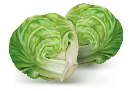 Brussels cabbage on a white background. Vector mesh illustration Vector Illustratie