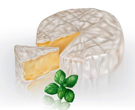 Camembert brie cheese and basil leaves on a transparent background. Vector mesh illustration