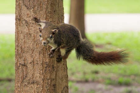 Squirrel is Hanging on the tree