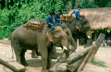 Elephant training camp in river mountain photo