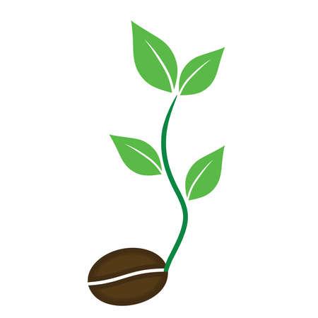 planta de cafe: vector de la planta de café iconos del vector de semillas