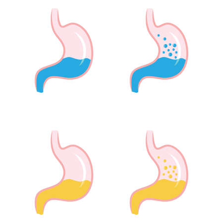 digestive system: stomach icon vector