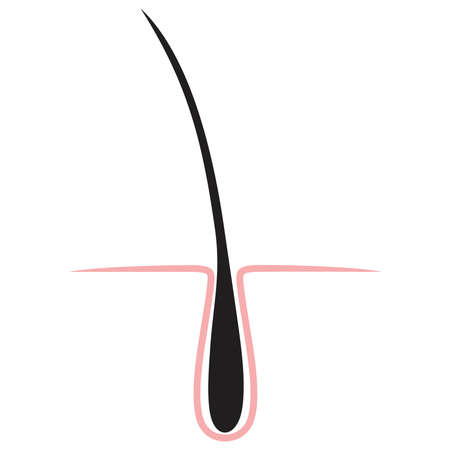 sebaceous: hair icon isolated. Illustration