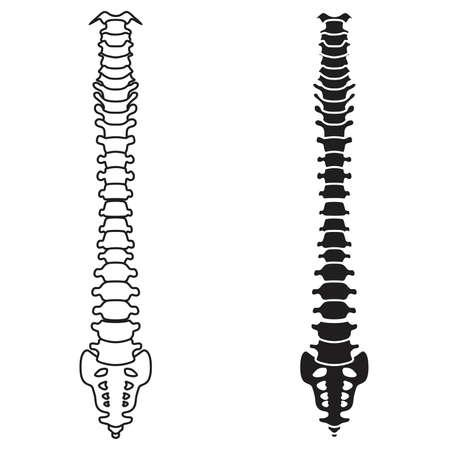 body massage: Spine vector Illustration