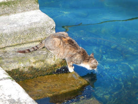 seawater: Cat drinking a seawater Stock Photo