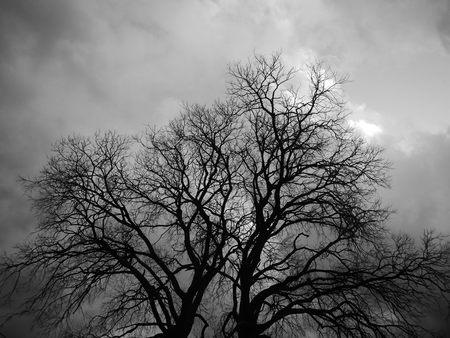 Tree creating amazing fractals, bw photo Stock Photo