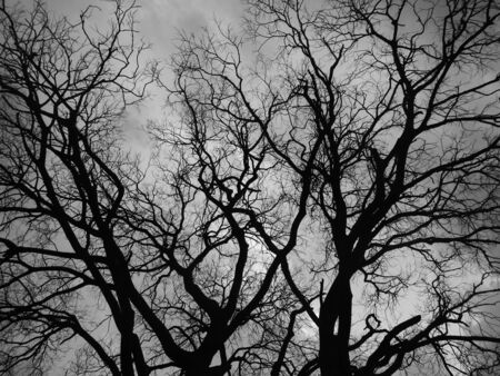 fractals: Tree fractals, bw photo Stock Photo