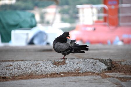 Beautiful pigeon in the park with colorful background. Banco de Imagens