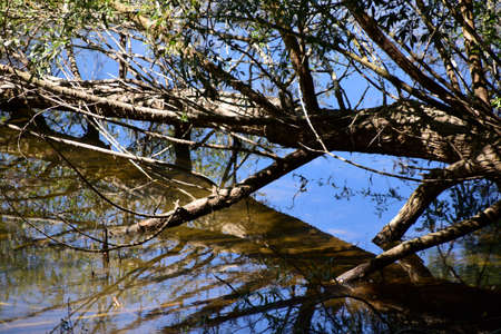 Old tree fallen in the water, reflection in the water, blue sky above.