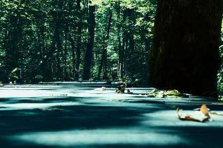Wooden road through the forest. Photo taken in National Park Biogradska Gora, Montenegro.