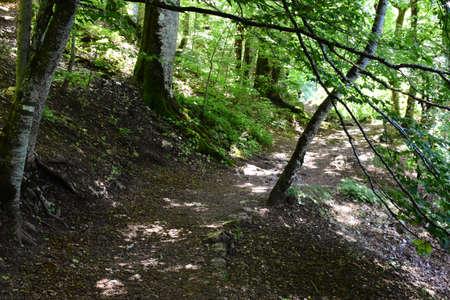 A path through the forest. Photo taken in National Path Biogradska Gora, Montenegro.