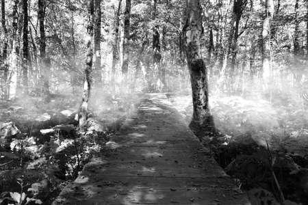 Spooky path through the forest. Photo taken in National Park Biogradska Gora, Montenegro.