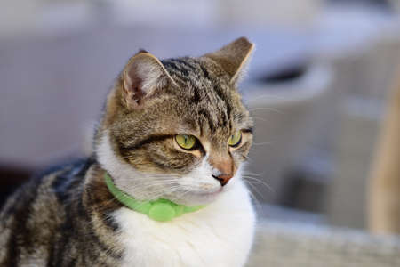 Cat with green collar.