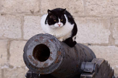 Cat on a cannon.