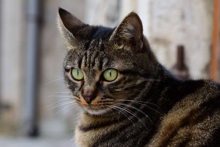 Portrait of a street cat with big eyes.