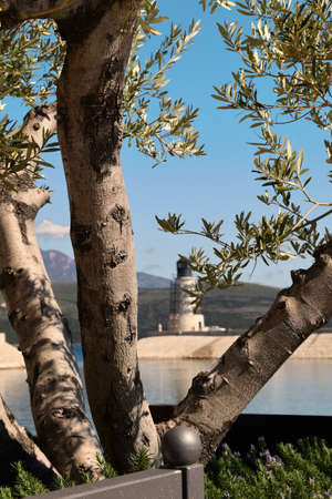 View on a new light tower through an olive tree. Beautiful sunny day.