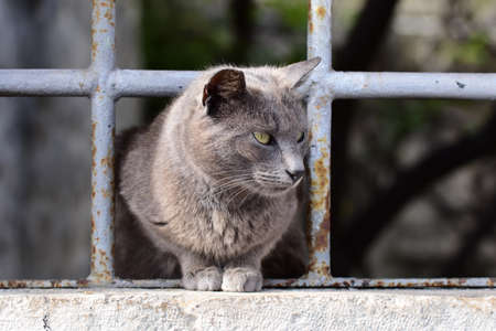 Cat coming out of the prison.
