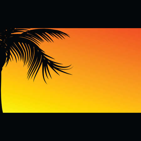 palmtrees: palm silhouette illustration in nature