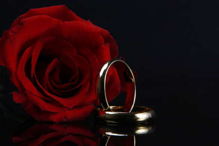 nice ring with rings rose myshoplah free roses hd wallpapers red