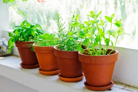 Pots with fresh green herbs on balcony Stock Photo