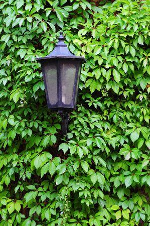 wall ivy: l�mpara antigua calle de la vendimia en la hiedra de la pared