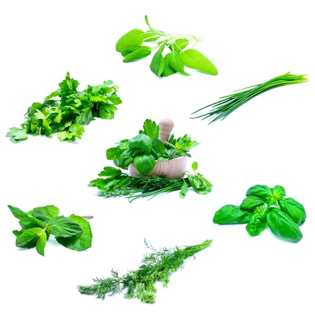 fresh herbs collection with mortar and pestle isolated on a white background photo